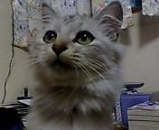 image/keisetuen-2005-10-31T18:00:03-1.jpg