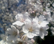 image/keisetuen-2006-04-09T21:31:08-1.jpg
