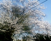 image/keisetuen-2006-04-09T21:31:08-2.jpg